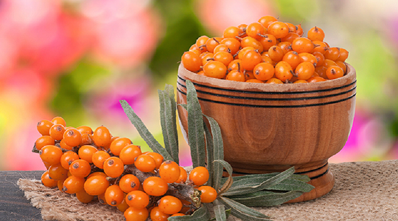 Sea buckthorn protects your heart, offers antioxidant health benefits