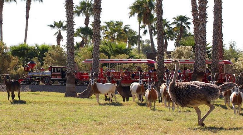 Wildlife World Zoo named best zoo in Arizona